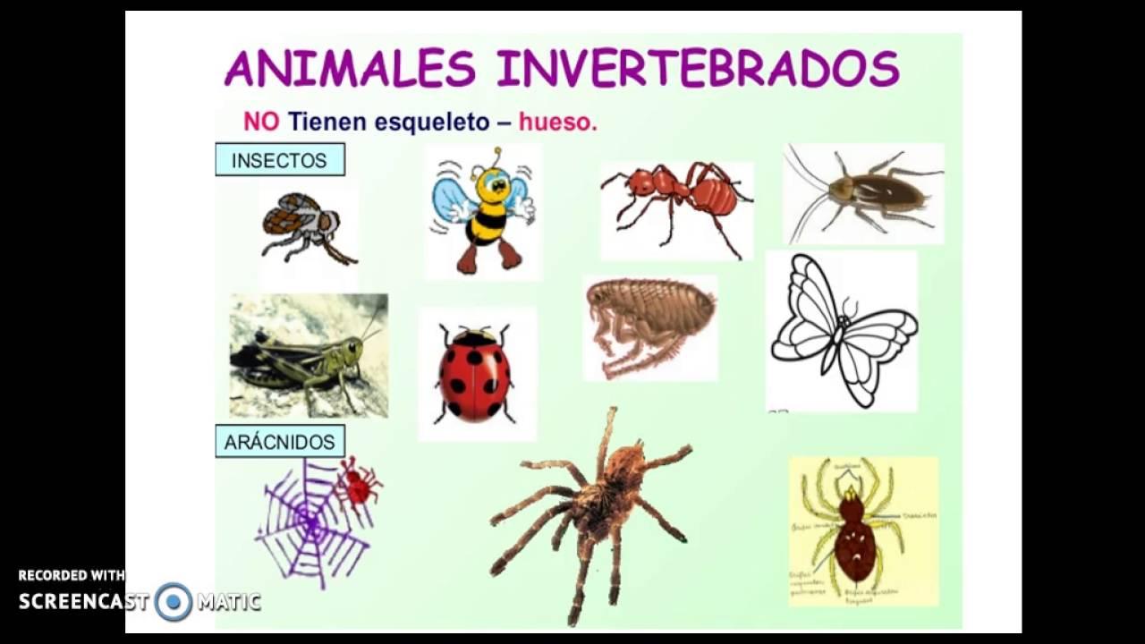 Dibujos Para Colorear De Animales Invertebrados Y Vertebrados: Animales Vertebrados E Invertebrados