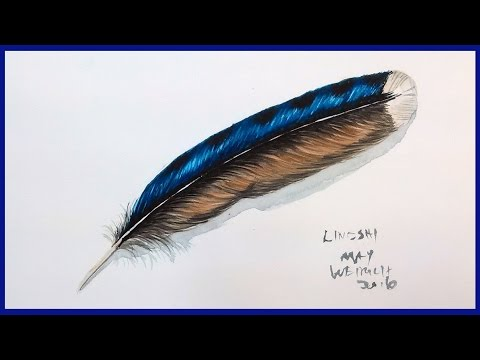 Blue Jay Feather in Watercolor full tutorial