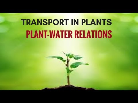 Transport in Plants: Plant-Water Relations