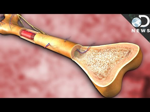 What Does Bone Marrow Actually Do?