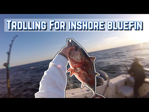 BLUEFIN TUNA | Trolling For Tuna