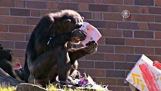 Животным в сиднейском зоопарке уже дарят подарки на Рождество (новости)