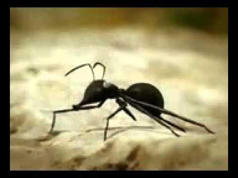 Saraiki Funny Clip-Funny Ants Story