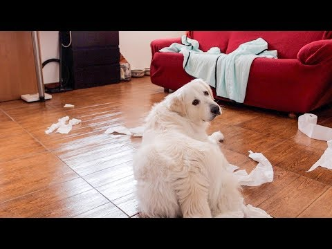 Dog Home Alone | Funny Dog Bailey