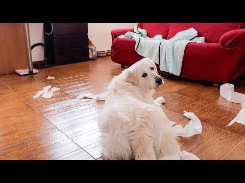 Dog Home Alone   Funny Dog Bailey