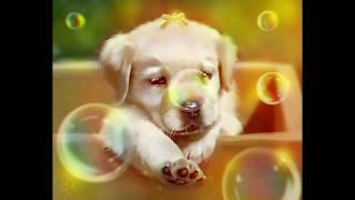 Отрисовка щенка по фото