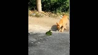 cat vs snake funny videos, cat funny moments 2019   funny animal fights videos