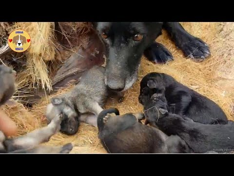 Rescue Poor Stray Mother Dogs and Her Puppies - Rescue Dog!