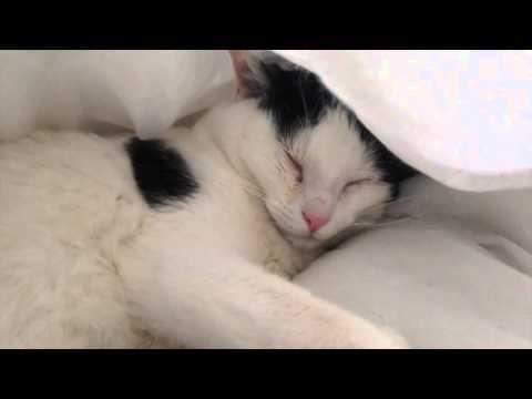 Ninou Le Chat - Le Coryza Chez Le Chat
