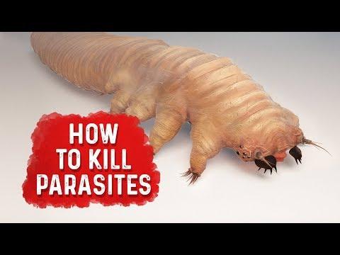 how-to-kill-parasites