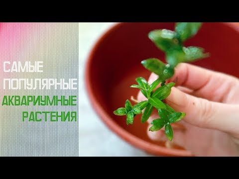 Неприхотливые аквариумные растения / фото, названия, описание