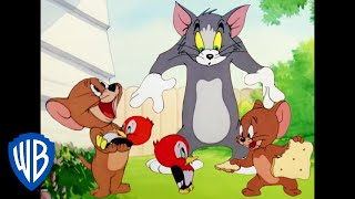Tom & Jerry in italiano | Jerry e il Piccolo Picchio | WB Kids