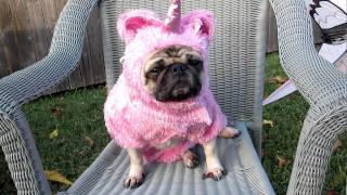 Unicorn Pug's Tea Party