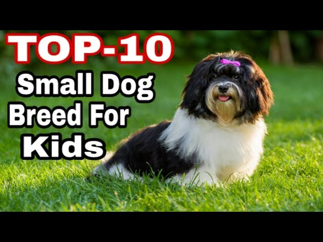 "Top -10 Best Small Dogs Breeds for Kids and Family /""Aryan Dog Club"" Aryandogclub"