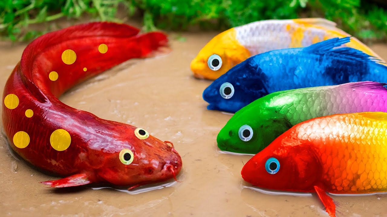 Carp Squad Playing Hide-and-seek Encounters Cunning Catfish - Primitive Cooking - Stop Motion Asmr