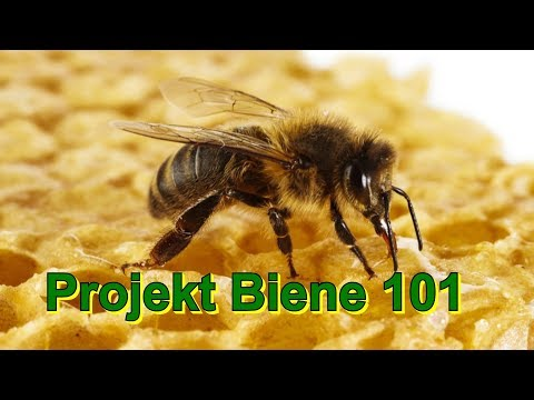 Projekt Biene 101 - letztes Bienenvideo
