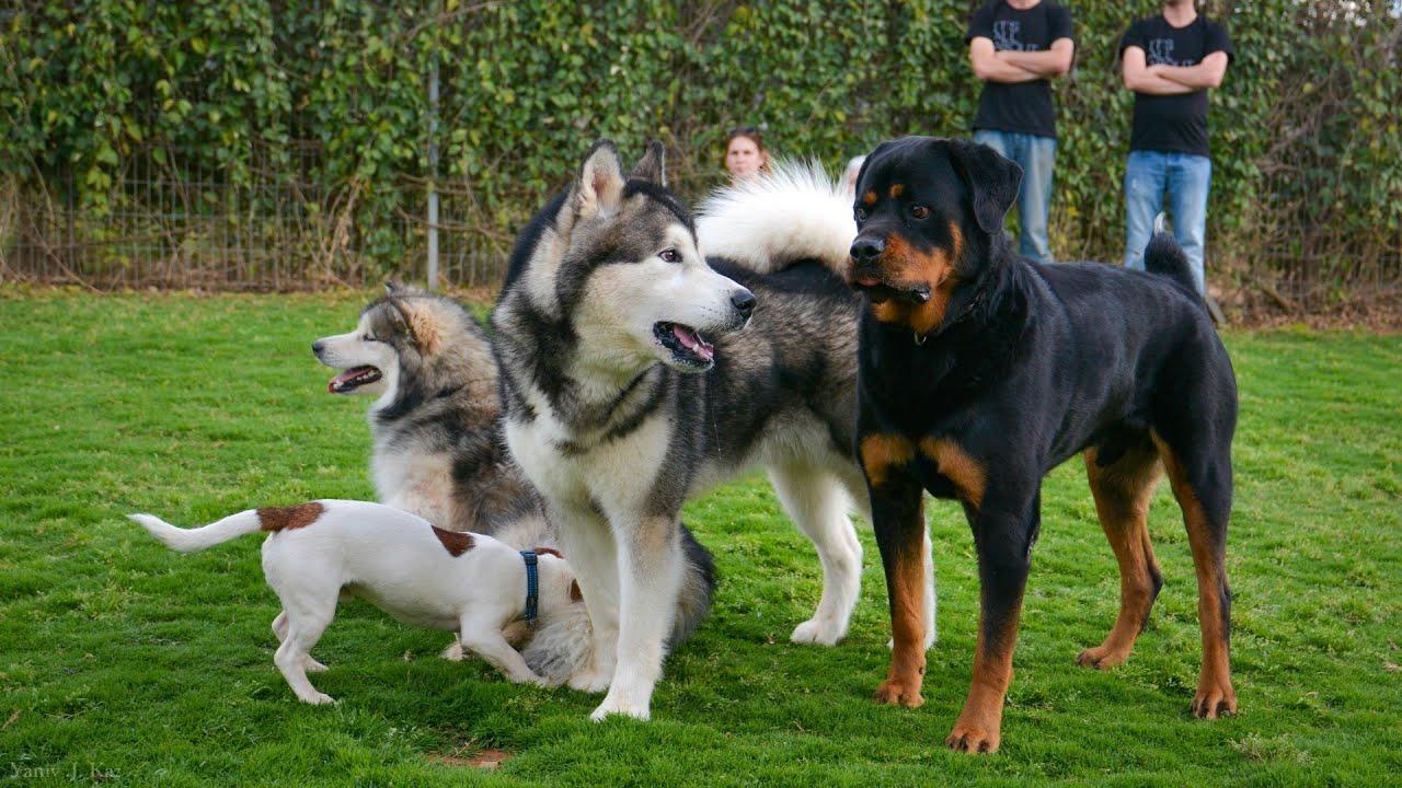 מה כלבים אומרים ? שפת הכלבים - אורן עדיקא