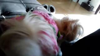 Horny female dog