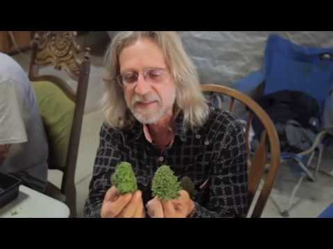 Grow Cannabis – Cannabis Expeditions The Green Giants of Cal