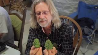 Grow Cannabis – Cannabis Expeditions The Green Giants of California – by Jorge Cervantes