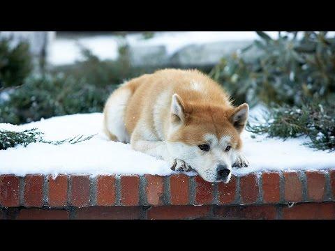 Реакция собак после долгой разлуки...