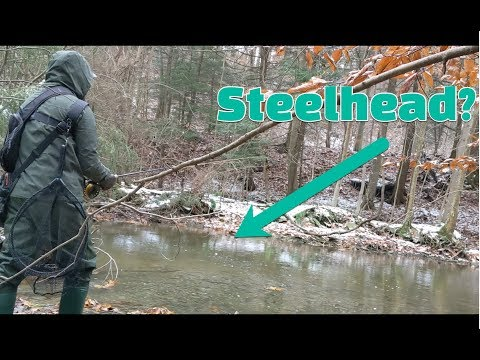 Lake Erie Small Trib Steelhead  - Nov 2018