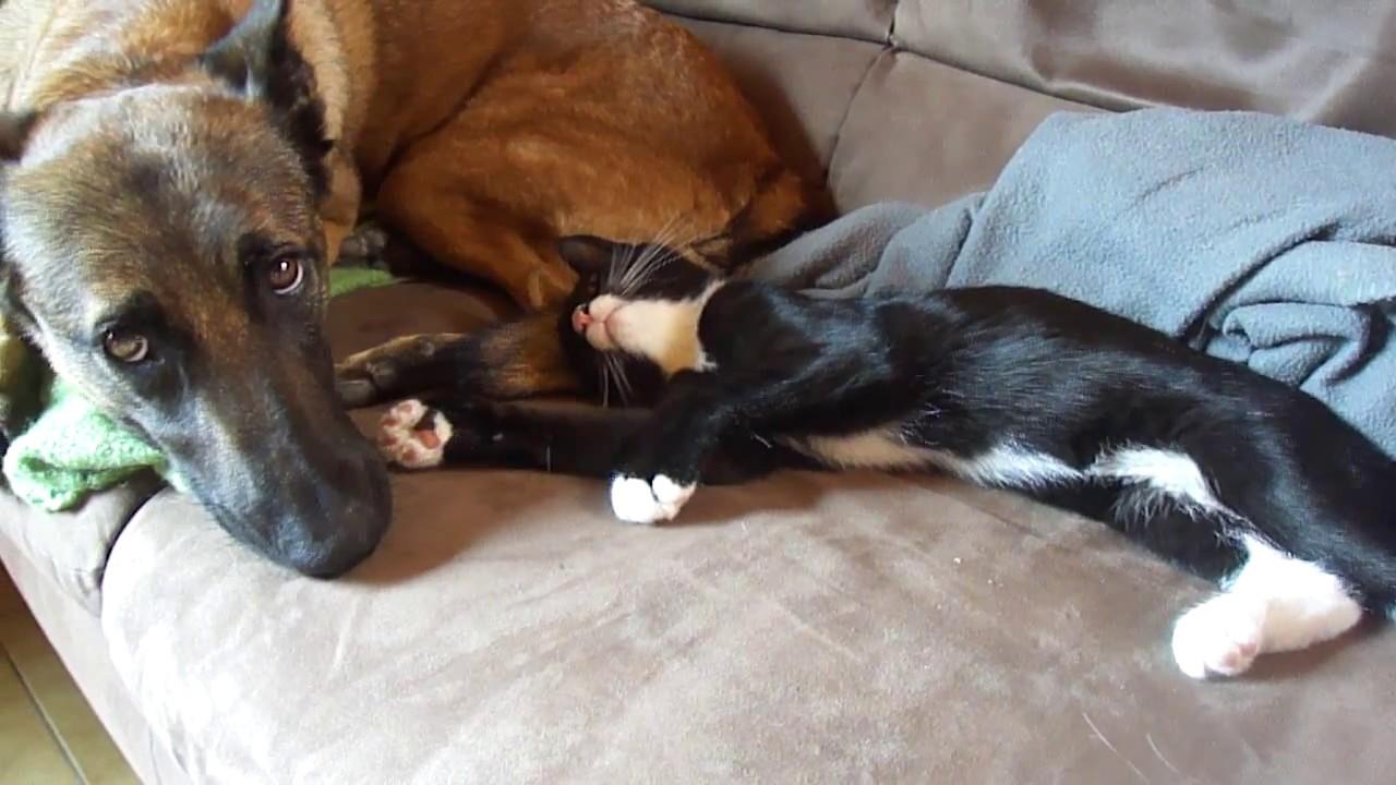 chat jeunes recherche l amour gratuit