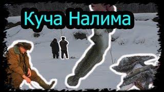 """Зимняя рыбалка на Налима """" Тычки, Поставки"""" р. Иня  Куча налима))"""
