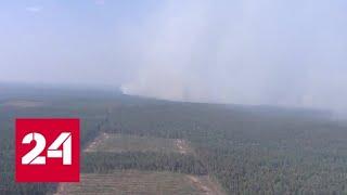 США предложили России помощь в борьбе с лесными пожарами - Россия 24