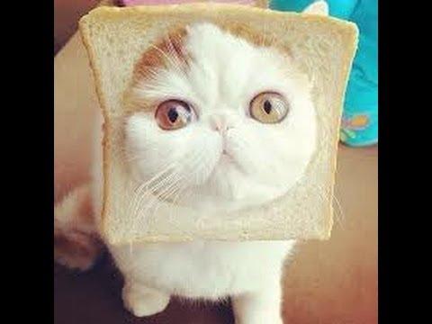 Как по китайски кошка