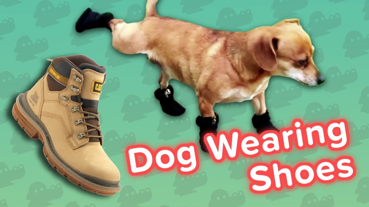 Dogs Wearing Shoes Compilation