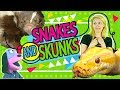 SNAKES and SKUNKS | kids videos