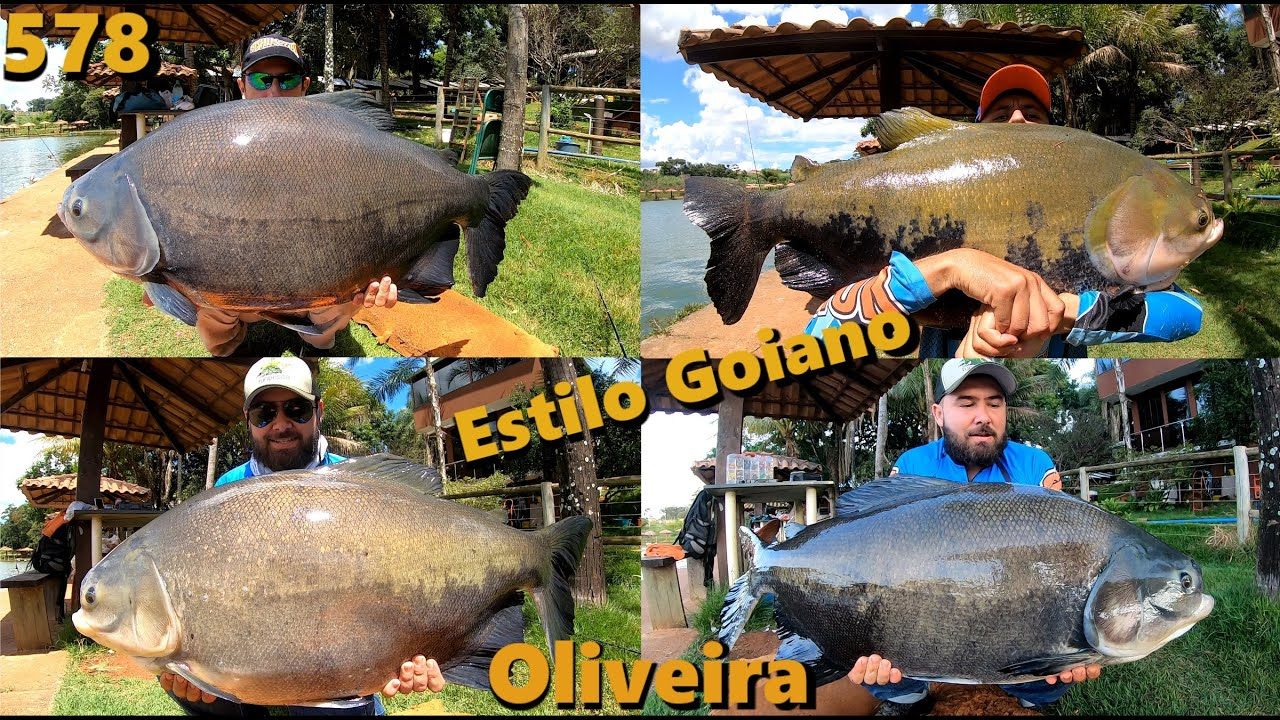 Clube de Pesca Oliveira - 100% estilo Goiano com grandes exemplares - Programa 578 Pesca e Pescaria