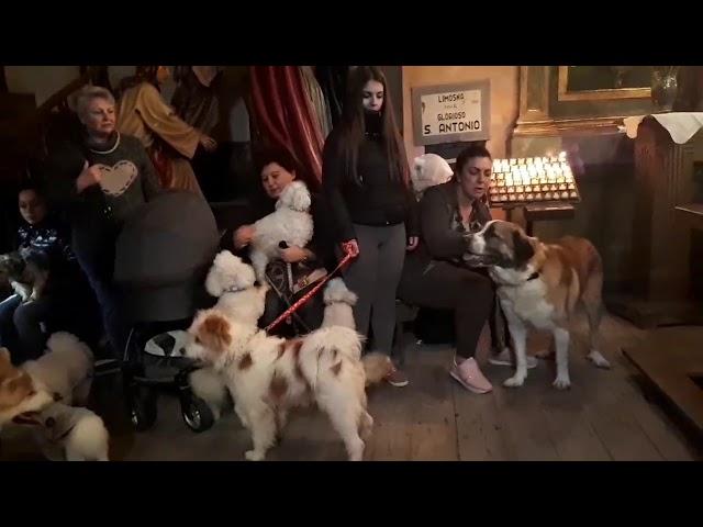 Bendición de mascotas en la Capela da Soidade