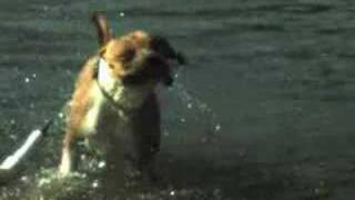 This Video Is Unavailable.     A Dog Drying Itself In Slow Motion.
