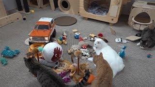 고양이와 장난감 친구들