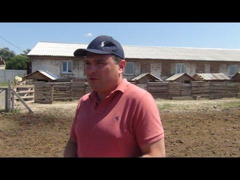 Опыт фермера Евгения Андриенко по разведению свиней порды Венгерская мангалица