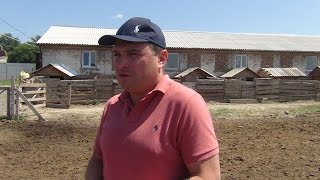 видео Разведение быков на мясо как бизнес: от А до Я