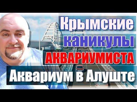 Крымские каникулы аквариумиста. Аквариум в Алуште.