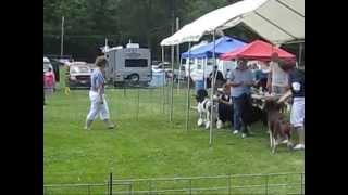 Apbtcne Dog Show, Jun. '13 (ukc Conformation)