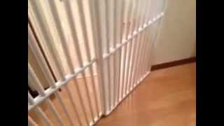 Tall Pet Gates For The Home - By Rover Company