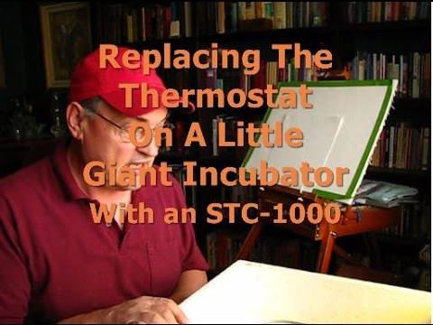Replacing Little Giant Incubator Thermostat with STC-1000 - YouTube