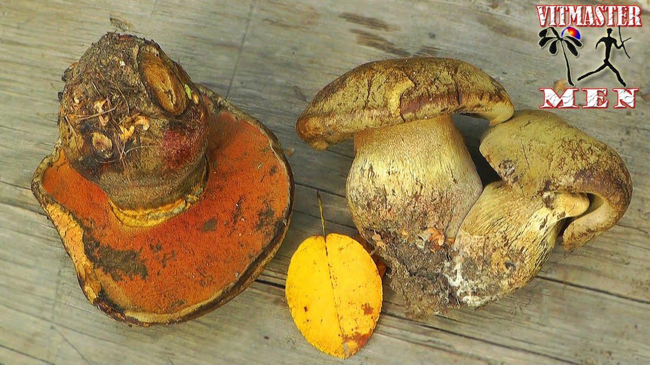 как готовить глухой гриб