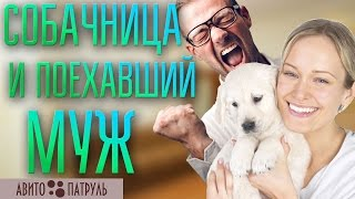 Собачница и ее поехавший муж    АВИТО-ПАТРУЛЬ