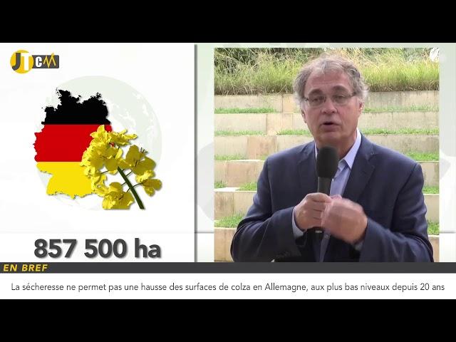 Hausse des imports de blé français par l'Egypte !