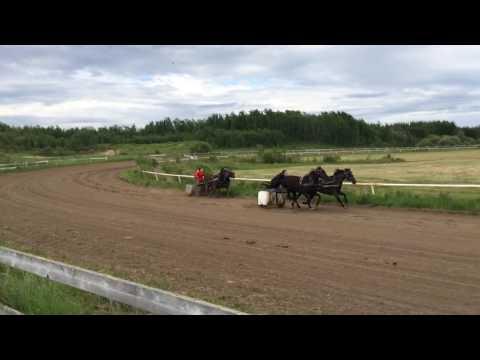 Chariot racing in Elizabeth settlement