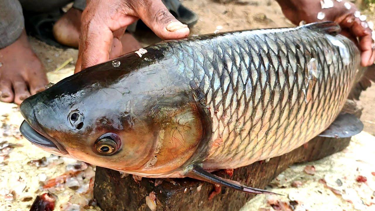 7 KG Big Rohu Fish Cutting by Village Fisherman - Big Fish World