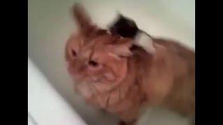Кот и мыши в ванной)