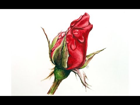 Red Rose in Watercolors Painting Tutorial