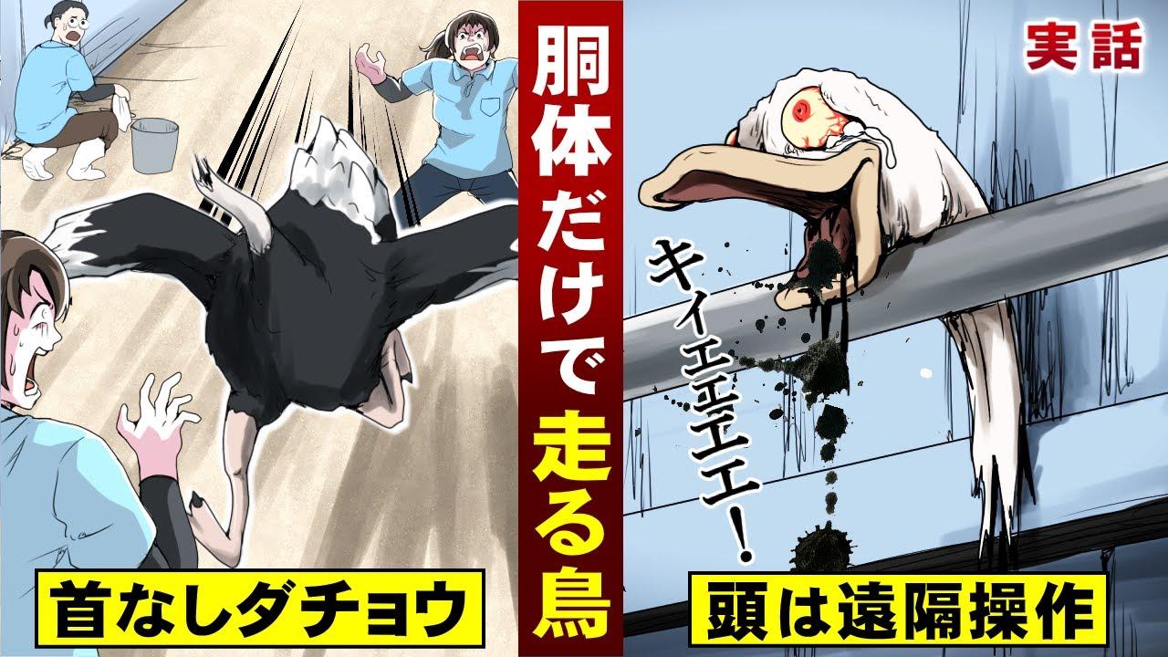 【実話】胴体だけで走る鳥…首なしダチョウ。頭が遠隔操作する。